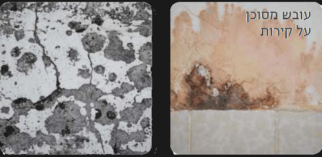 משמיד עובש לפני ואחרי
